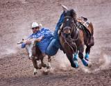 Tucson Rodeo 2019 #2
