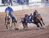 Tucson Rodeo 2019 #3