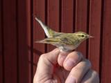 Handheld birds