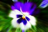 Flowers of Yuba City