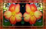 Begonia Om