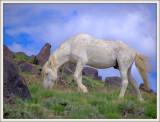 Goodbye to the Onaqui Herd.