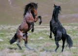 Spring Stallions