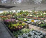 Botanic. Flowers & Plants
