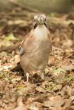 vogels G tot en met H /  Birds G up to H