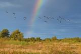Rainbow & Black-bellied Whistling Ducks