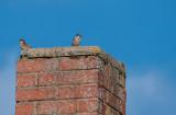 Sparrow Guard Post