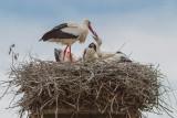 A Nest Full
