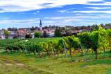 Vineyard and Village