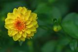 Garden Colors in October