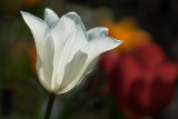 A White in the Light