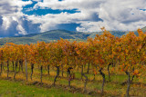 The German Wine Road during the Seasons