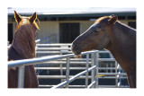summit_ranch__other_horses
