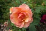 2021-06-04 (Rose Garden Test Shots)-1000060.jpg