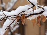 Morning snow 066_PC270480