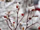 Morning snow 067_PC270492