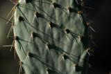 Sonora desert 071_AR700283.JPG