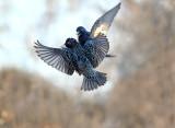 Wings For All Seasons