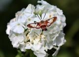 Buttlerflies And Moths