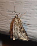 Micro, Tortricid, Pyralid and Crambid Moths