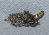 Bagworm5