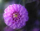 Symphony in violet....
