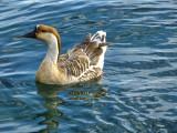Meeting Mother Goose....