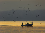 The fishermen come back at sunrise...