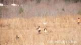 2019 CSCA Hunt  190317 030.jpg