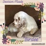 Birdee  190323 002.jpg
