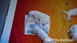 Jolene 1 Litter  190727 003.jpg