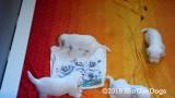 Jolene 1 Litter  190727 004.jpg