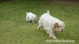Jolene 1 Litter  190901 008.jpg
