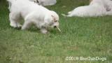 Jolene 1 Litter  190908 025.jpg