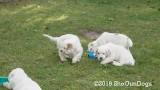 Jolene 1 Litter  190913 011.jpg