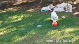 Jolene 1 Litter  190924 026.jpg