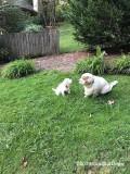 Polly and Sierra  190926 018.jpg