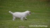 Jolene 1 Litter  191015 036.jpg