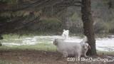 Jolene 1 Litter  191117 015.jpg