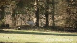 Jolene 1 Litter  191122 017.jpg