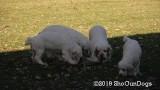 Jolene 1 Litter  191122 028.jpg