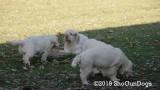 Jolene 1 Litter  191122 029.jpg