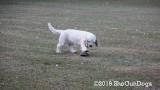 Jolene 1 Litter  191125 009.jpg