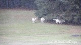 Jolene 1 Litter  191201 004.jpg