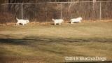 Jolene 1 Litter  191212 008.jpg