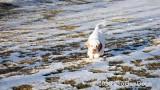 Jolene 1 Litter  200102 007.jpg