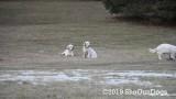 Jolene 1 Litter  200106 010.jpg