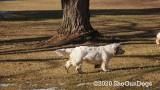Jolene 1 Litter  200107 014.jpg