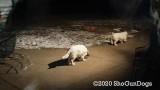 Jolene 1 Litter  200107 030.jpg