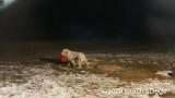 Jolene 1 Litter  200107 031.jpg